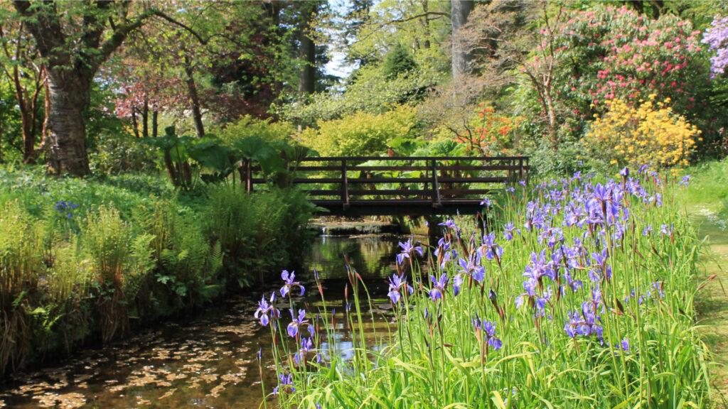Geilston Garden burn and irises at bridge. Image © Friends of Geilston