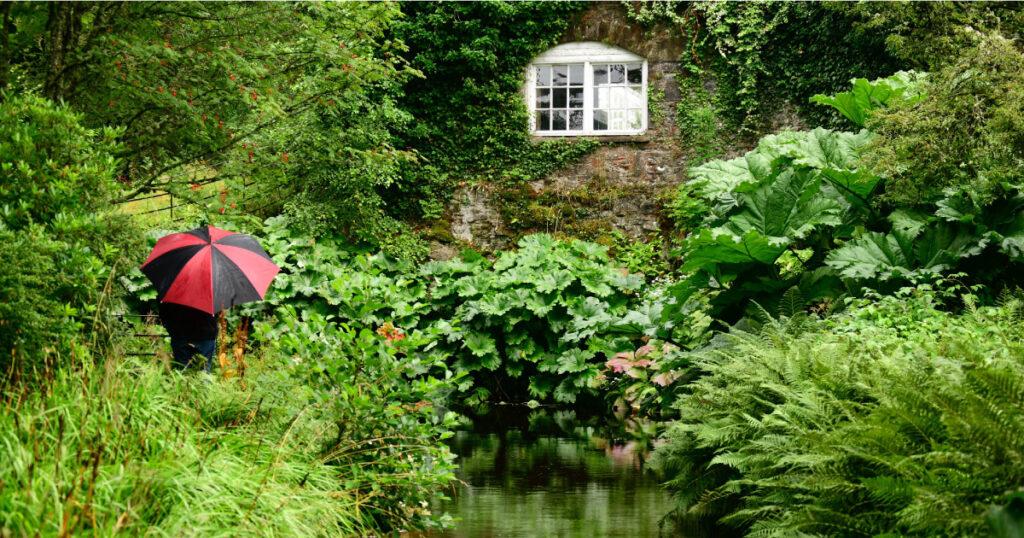Geilston No Rain No Flowers - Kirsty Wilson. Image Source: Friends of Geilston