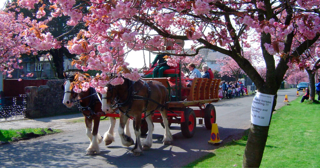 Blossom Festival horse drawn carriage. Image source: © Helensburgh Heritage Trust
