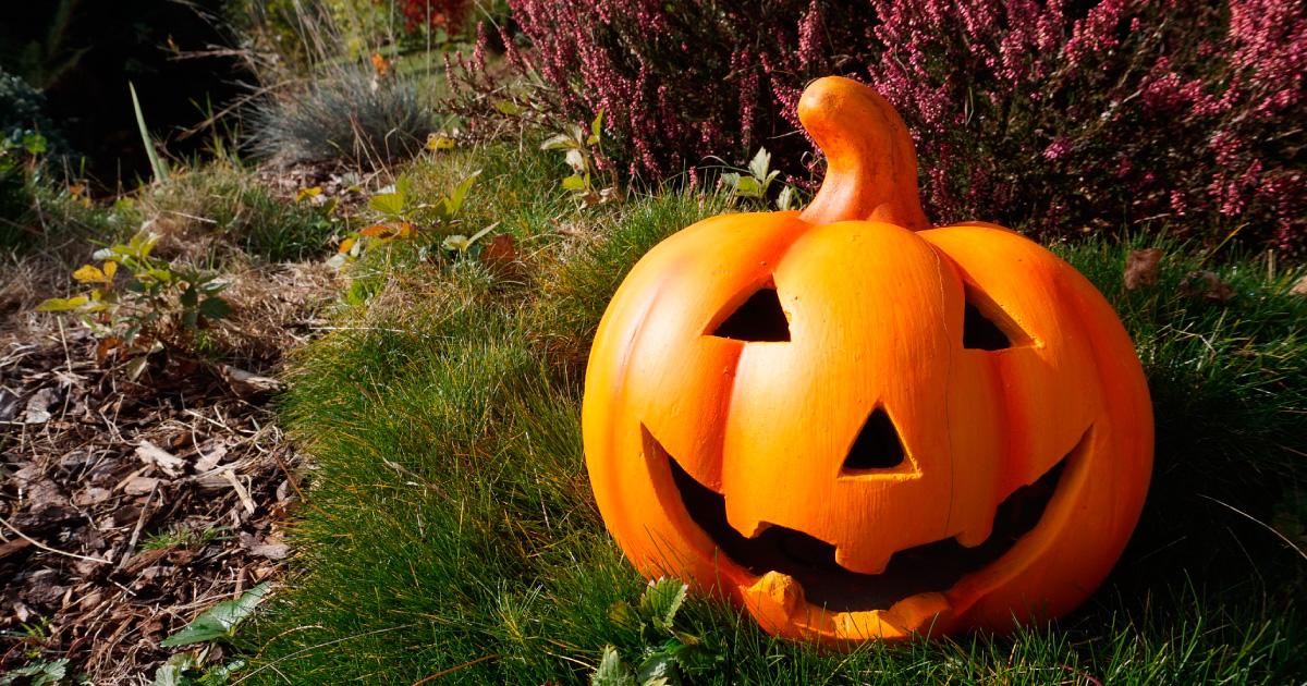 Halloween pumpkin in garden, image source https://pixabay.com/photos/pumpkin-garden-halloween-orange-980587/ by Alexandra_Koch