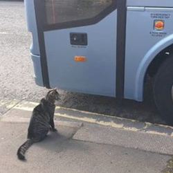 George the Helensburgh Cat waiting for the bus Image used courtesy of J. Hood/George the Helensburgh Cat.