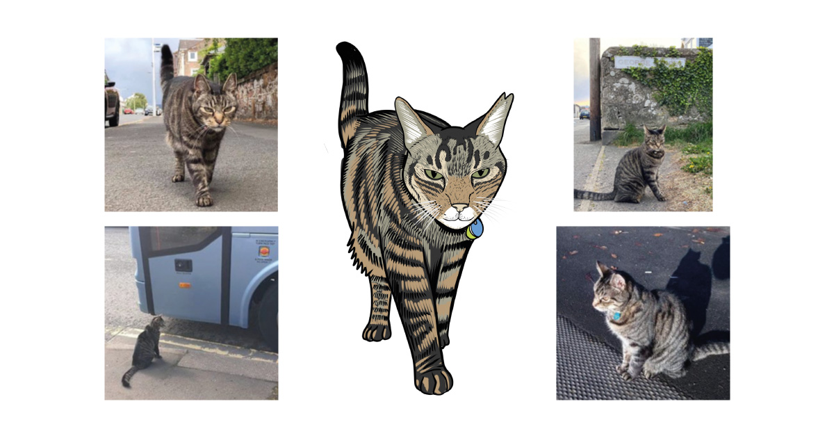 George the Helensburgh cat collage. Images used courtesy of J. Hood/George the Helensburgh Cat