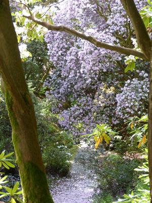Glenarn Glen view Image © S. Thornley, Glenarn Garden.
