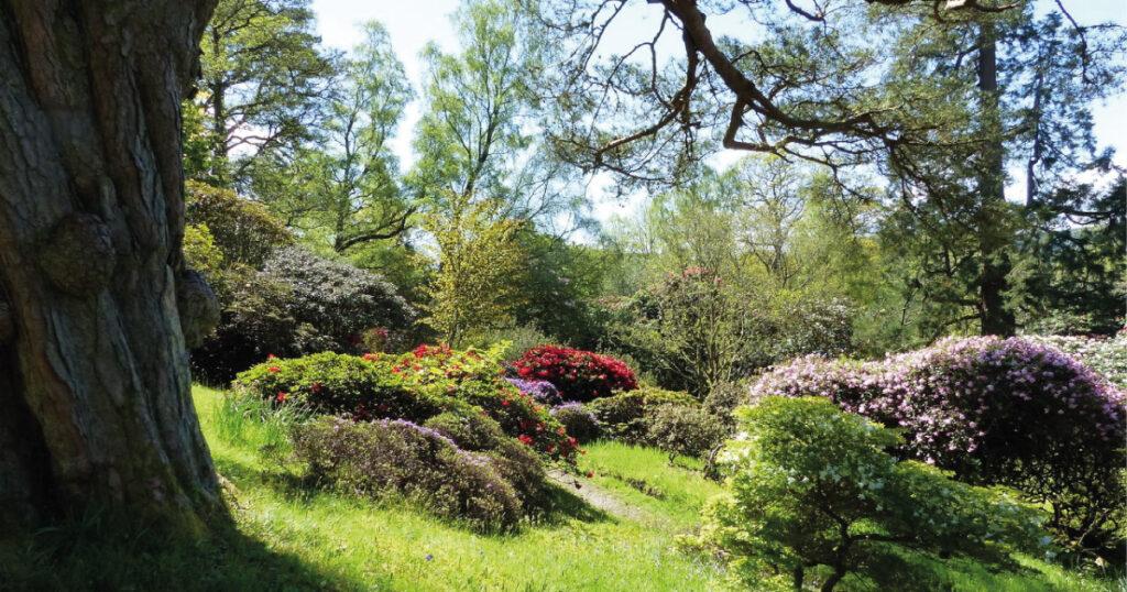 Glenarn View. Image © S. Thornley, Glenarn Garden.