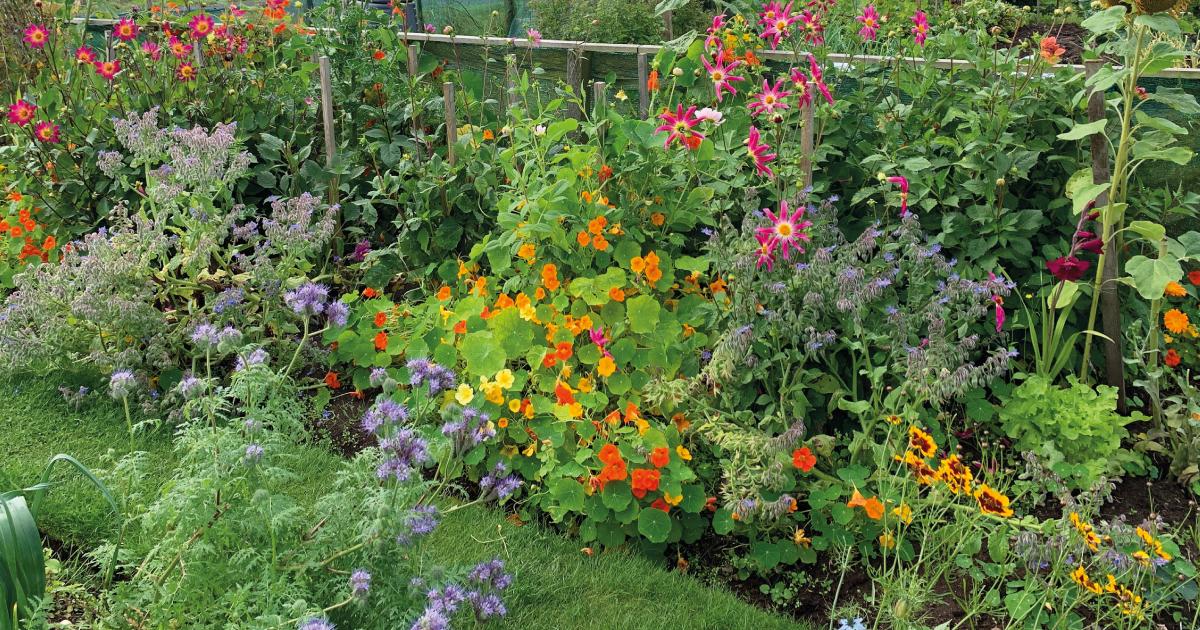 Garden bed of flowers